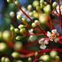 20110830162233-spring_blossoms