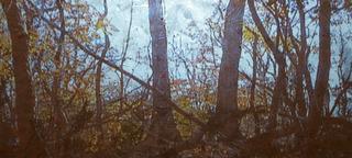 Gold landscape 2, Donald Moffett
