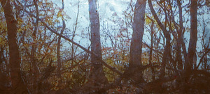 20110904203333-donald-moffett_gold-landscape-2_main
