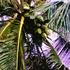 20110906125328-under_palm-300_cp