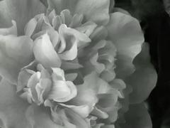 20110906222819-_camilla-white