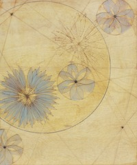 Blue Daisy Star Map, Karen Sikie