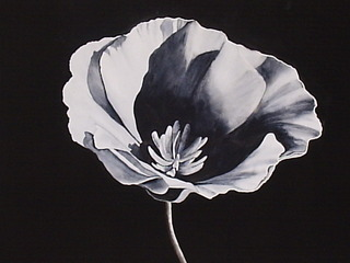 Black Poppy, Debra Flores