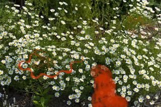 Garden Bots_6, Kathleen J Graves