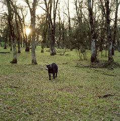 20110915131549-goat