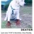 Lost_dog_82