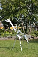 Giraffe, Nicolas Touron