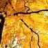 20111013131116-yellow