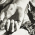 Arao_untitled_thorn_prick_08_400