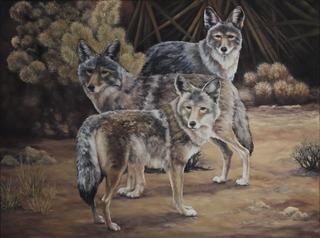 Tres Hombres, Marcia Geiger