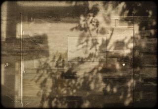 Tree Shadows 3, Daniele Kelly