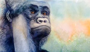 20111108113412-gorilla