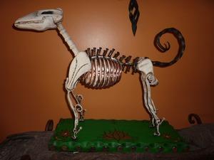 20111120092535-doggybone