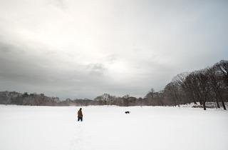 Long Meadow North, Joseph O. Holmes