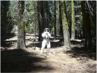 Traumanaut Tree Hugger, David Huffman