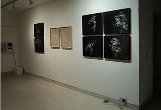 Installation View, Rohini Devasher