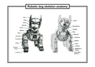 Robotic dog skeleton anatomy, France Cadet
