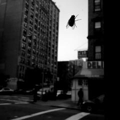 The Fly, Kirsti Itameri