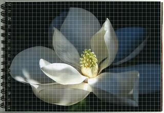 Notebook Magnolia, Cidne Hart