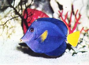 20111206160749-fish12
