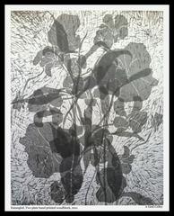 Entangled, A. Gaul Culley