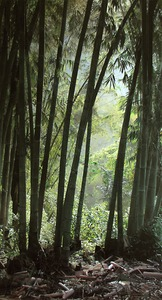 20111210172423-indonesiabamboosmall