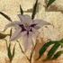 Flower_on_gold_leaf-_2006__2_