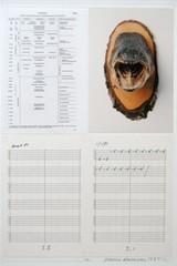 Urzeit/Uhrzeit (detail)  , Hanne Darboven