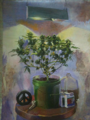 Marijuana Plant, Jesse Edwards
