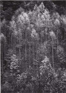 20111228203219-aa_dawn_autumn_forest_fade7