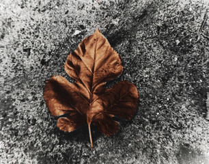 Leaf,Gabriela Alvarez
