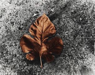 Leaf, Gabriela Alvarez