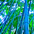 20111230191835-bamboo_dreams