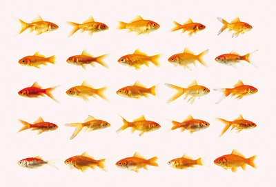 20120114191523-goldfish50001a4