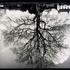 20120108165040-trees_banner_lg