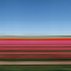 Travelling Still, Tulip Fields, Holland, XIV,Rob Carter