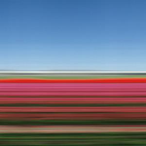 20120122095028-rob_carter_tulip_fields_holland_xiv