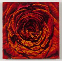 Rose XI, Jim Morphesis