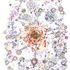 20120122192816-cellular2_comprb