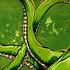 20120124200154-underwater_curiosity_green