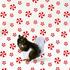20120127124527-web_squirrel