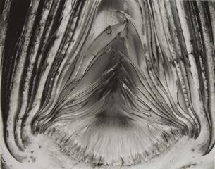 Artichoke Halved, Edward Weston