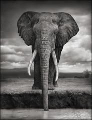 Elephant Drinking, Amboseli, 2007, Nick Brandt