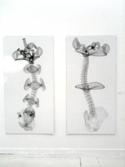 Ajna Spine Series 2 (vector),Michael Rees
