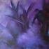 20120205060304-purple_haze