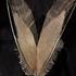 20120211220802-winged_no