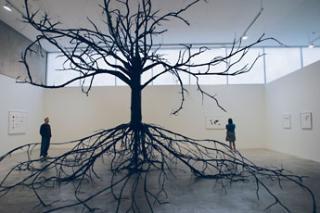 Excavated Tree , Katie Holten