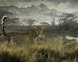 Elusive leopard, Cheryl Medow