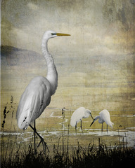 Great egrets of the world,Cheryl Medow