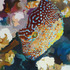 20120215220753-gabbay_now_we_re_very_far_below__the_exotic_fish_are_all_aglow